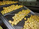 苹果罐头生产设备