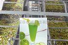 苹果汁生产线