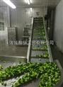 水果蔬菜清洗机|苹果毛刷喷淋清洗机