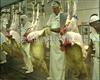 气动松皮机羊屠宰流行线设备